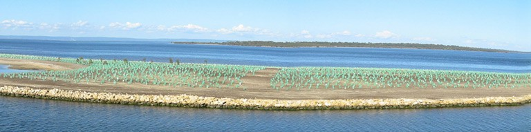 Port Bouvard Eastport before revegetation