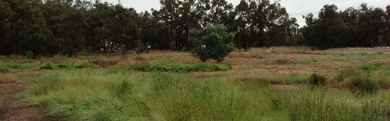 Helena Valley before revegetation