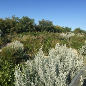 Typical vegetation 2015