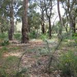 AK Reserve 2012