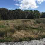 Sedgeland Zone A before